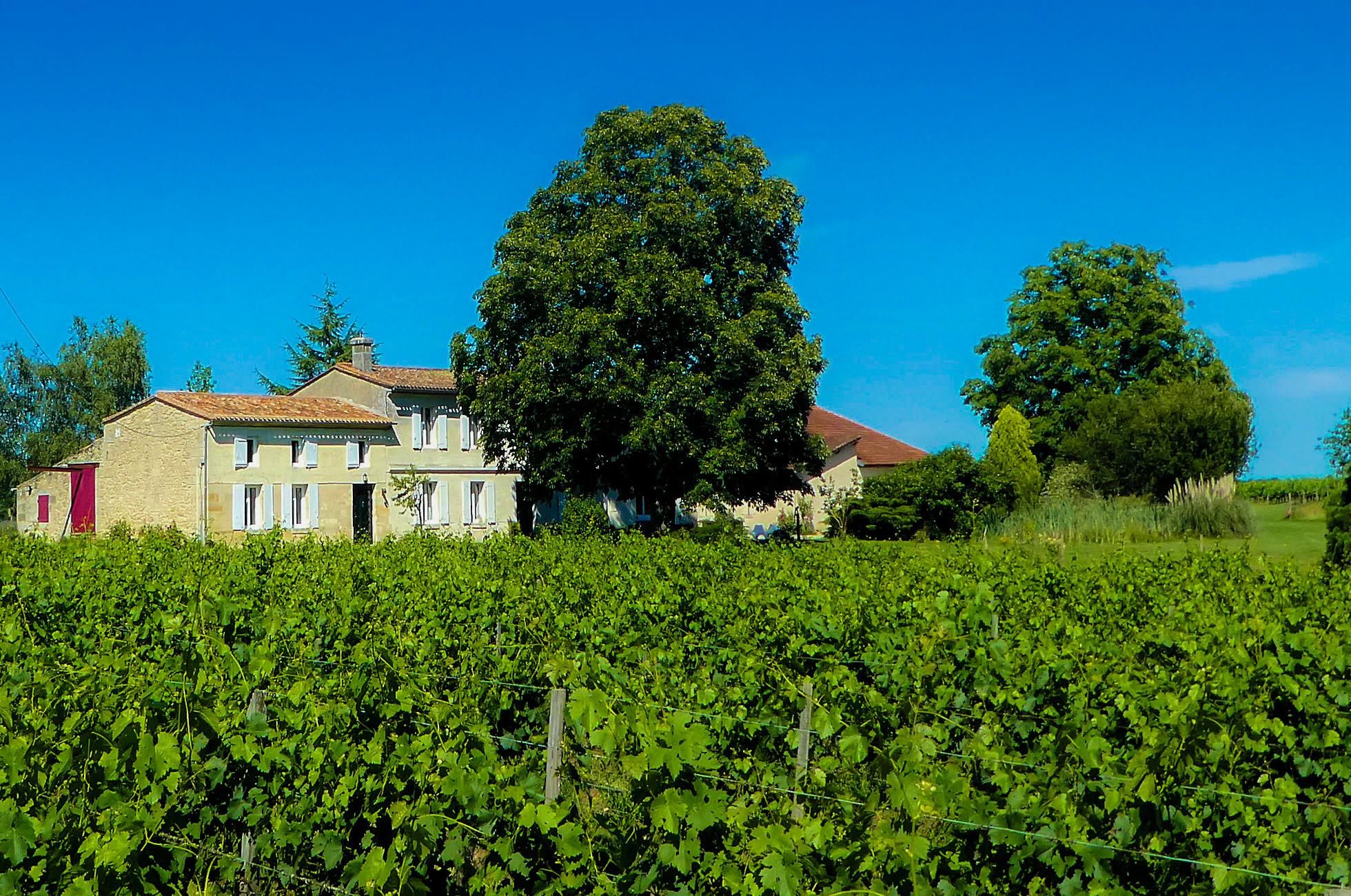 Au premier plan, les vignes du Château Rolin Haut Briand, le Domaine en arrière plan
